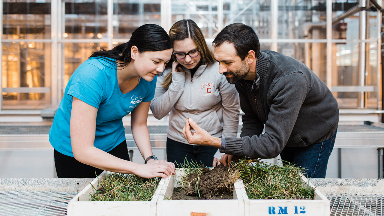 Researchers looking at plants.